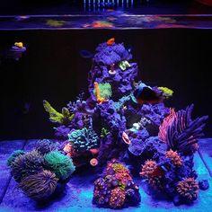 🌈 #reefnutrition#sdreefs#polyplab#mixedreef#ultraeverything#ecotechmarine#allmymoneygoestocoral#reefraf#reefkingz#reefaholiks#reefjunkie#corals#clean#wwc#vwreefs#macna#saltwatertank#sdreefshop#life#ultrafishkeepers#naturalreef#zoas#euphyllia#sps#sticks#inverts#topshelfonly#loudpack#reefer#lgv10