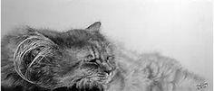 cat realistic pencil art