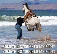 I've had some horses like this at work! Makes life rather interesting.