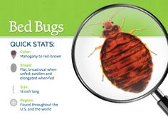 49 great bed bugs images in 2019 bed bugs pest management bed rh pinterest com
