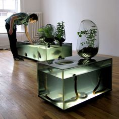 River Plant Aquarium by Mathieu Lehanneur - This version of hydroponics uses a refrigerated aquarium as a hatchery for freshwater fish, while vegetables grow on top in glass pods. The vegetables use the water from the fish tank, extract nutrients, filtering and purifying the water for the fish to reuse and develop.