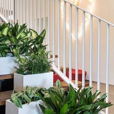 Choose the Balcony Planter - Matt White. Clean shapes and a smooth matte white finish with a timeless appeal. High quality and lightweight. Balcony Planters, Tall Planters, White Planters, Button Family Picture, Family Picture Frames, Planting Plants, Hanging Succulents, Indoor Plant Pots, Rose Design