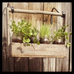Hung my herbs on the fence in mason jars... :)