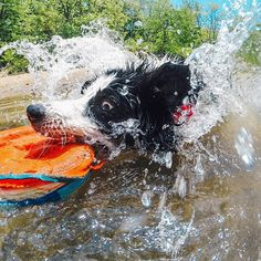 Photo of the Day! Fergie doing what she does best...playing fetch! We're celebrating #NationalPetDay so be sure to share your furry friends with us! #GoPro  @deanpgroover
