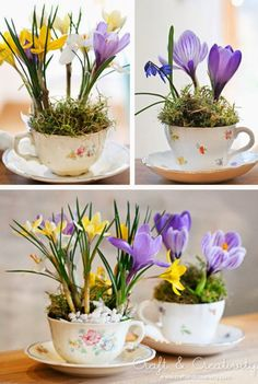 Bulbs in teacups