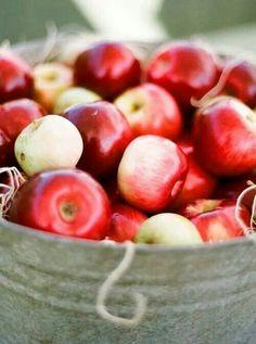 Esta manzana tiene magia/ This apple has magic Apple Harvest, Harvest Time, Fall Harvest, Apple Farm, Apple Orchard, Orchard Lane, Apple Tree, Red Apple, Apple Season