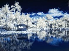 Snowy Landscapes by Maria Netsounski  it may appear that these are photos of some snowy wonderland. But upon closer inspection you will see that these landscapes are made up of tropical foliage and surroundings.