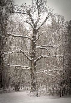 Winter Impressionen no 1