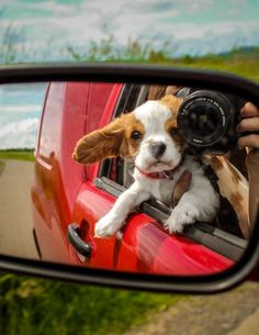 Grab your furry friend, pack up the car, and take a road trip!