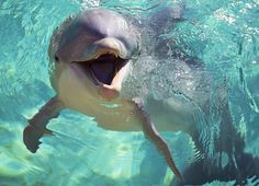 Dolphins are SO cute! The Ocean, Ocean Life, Photo Dauphin, Animals And Pets, Cute Animals, Dolphin Tale, Sea Cow, Bottlenose Dolphin, Wale