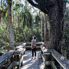 Enjoying this first day of the year in some nature at the Everglades   #firstday #newyearsday #everglades #evergladesnationalpark #naturelife #naturalmom #naturalkids #freshair🍃 #greenbloggers #greenness #southfloridaliving #miamiliving