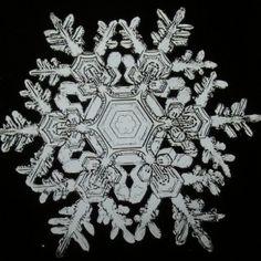 1. snowflake