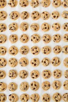 chocolate chip cookie bites - Kristen, how did they get this picture of your sweet little cookies? Make Chocolate Chip Cookies, Mini Chocolate Chips, Dessert Chocolate, Chocolate Cake, Just Desserts, Delicious Desserts, Yummy Food, Cupcakes, Yummy Treats