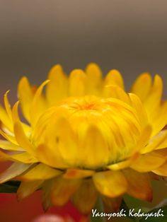 Be kind like a flower and know that life is beautiful like springtime ~ Debasish Mridha Photo@8270chihaya
