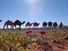 From my awesome trek with Australian Outback Camels