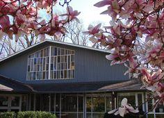 Cedar Lane Unitarian Universalist Church cherry blossoms
