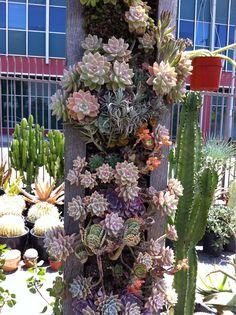 Nice vertical succulent garden. Xeric World Forums