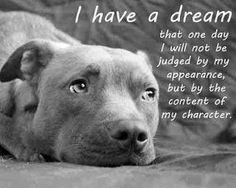 Please understand me. I am only here to love you and receive your love in return. Don't judge me by what you see in the media. There are bad dogs in all breeds. Please give me a chance before you call me a killer.