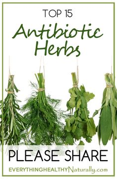 Top 15 Antibiotic Herbs
