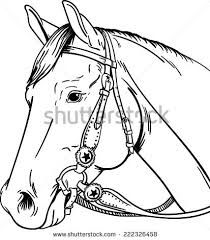 Image result for drawings of quarter horses