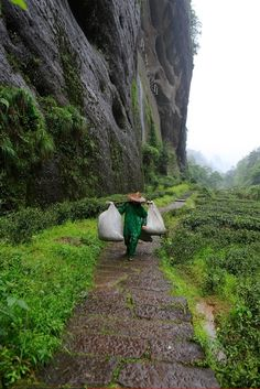 farm to cup: producing some of the tea in #China