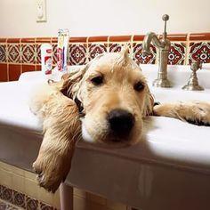 Must...escape...bath...time!