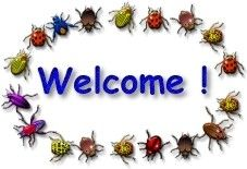 Insects theme ideas, including books, song, crafts, etc