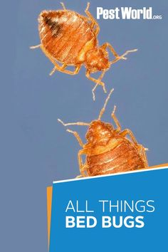 Don't let bed bugs ruin your summer vacation. This hitchhiking pest can quickly take over your entire home if an infestation isn't stopped immediately. Read more over at PestWorld.org. (Photo: Tom Myers, NPMA) Bed Bugs, Ticks, Ruin, Vacation, Summer, Vacations, Summer Time, Holidays Music, Ruins