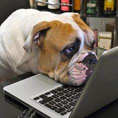 Bulldog online! Bulldog #bulldog