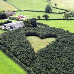 A heart-shaped meadow, planted 15 years ago by a farmer as a tribute to his late wife, can be seen in South Gloucestershire, England. He used oak trees across a six-acre field, with the heart pointing in the direction of her childhood home. Heart In Nature, Oak Tree, Trees To Plant, Heart Shapes, The Incredibles, 15 Years, Childhood, Green Building, Eco Architecture