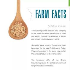 I love Young Living sacred frankincense! #farmfacts #frankincense
