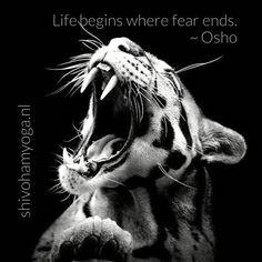 Life begins where fear ends #osho ♡ http://www.shivohamyoga.nl/ #inspiration #5d #advaita #loveandlight #love #yoga #wisdom #ShivohamYoga #namaste #metaphysical #clairvoyant #mindfulness #esoteric #healing #indigo #raisethefrequency #starseed #qigong #beautiful #starchild #raisethevibetribe #instadaily #lightworker #vedanta #spirituality #vegan #energy #pursuitofhappiness #soul ॐ