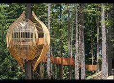 amazing... its a restaurant and a tree house! love it!