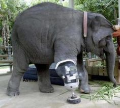 What a cool thing they did for this elephant