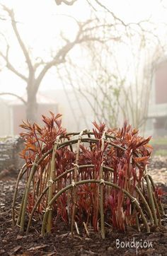 rabatt pioner Suddenly the sun breaks through the thick morning fog and I hurry out for a . - Suddenly the sun breaks through the thick morning fog and I rush out to catch the moment. Garden Cottage, Garden Trellis, Garden Art, Vegetable Garden, Garden Plants, Garden Design, Farmhouse Garden, Farm Gardens, Outdoor Gardens