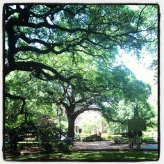 Sitting on a park bench on a lovely afternoon in Savannah…
