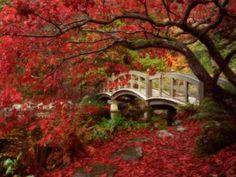 jardin japonais avec arbre rouge