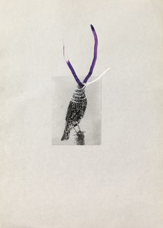 Several birds fly away when they understand it, Petrit Halilaj 2013