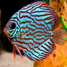 fish pictures - Google Search