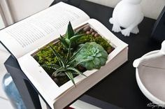 DIY livre végétal création Plus