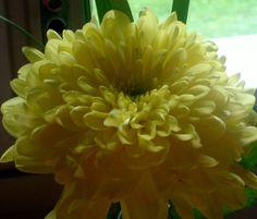 Daalia Flowers, Plants, Flora, Royal Icing Flowers, Floral, Plant, Florals, Flower, Bloemen