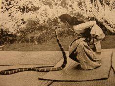 fireshovel: Burma's famous snake charmer Saya Hnin-Mahla kissed her King Cobra on the head as the highlight of her show.