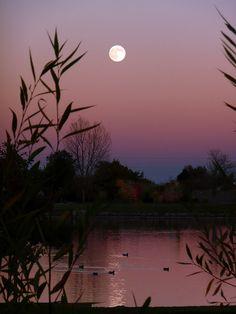 harvest moon ducks | Flickr - Photo Sharing!