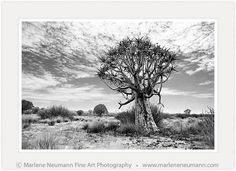 Marlene Neumann is a Master Photographer who intuitively captures the emotion in a landscape, beyond the camera.Her Black and White photographs are timeless Fine Art Photography, Landscape Photography, Dry Desert, Timeline Photos, Moose Art, Survival, Artsy, Stand Strong, Black And White