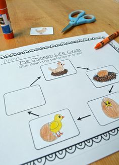 I have my Kindergarten and first grade students do this chicken life cycle cut-and-paste activity around Easter! It's also perfect for a life cycles unit or chicks in the classroom. Eyfs Activities, Science Activities, Writing Activities, Sequencing Activities, Science Ideas, Preschool Science, Spring Activities, Classroom Activities, Science Experiments