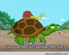 Slow down turtle – Funny Comic - Funny Picture