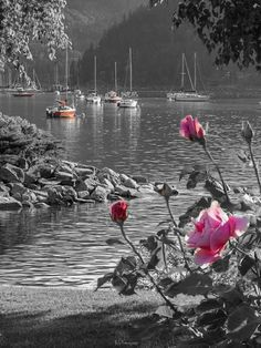 Splash of color Lake scenery Contrast Photography, Splash Photography, Color Photography, Pink Images, Colour Images, Black And White Painting, Black And White Colour, Color Splash Photo, Bright Paintings