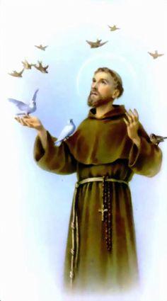 8c8a7b8e9a8b714b39403dc4d78eeb07--saint-francis-patron-saints.jpg (736×1326)