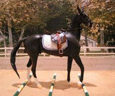 Model horse with ground pole jumps