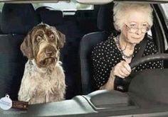 No se le ve muy contento. ¿No se fía de su ama conductora?